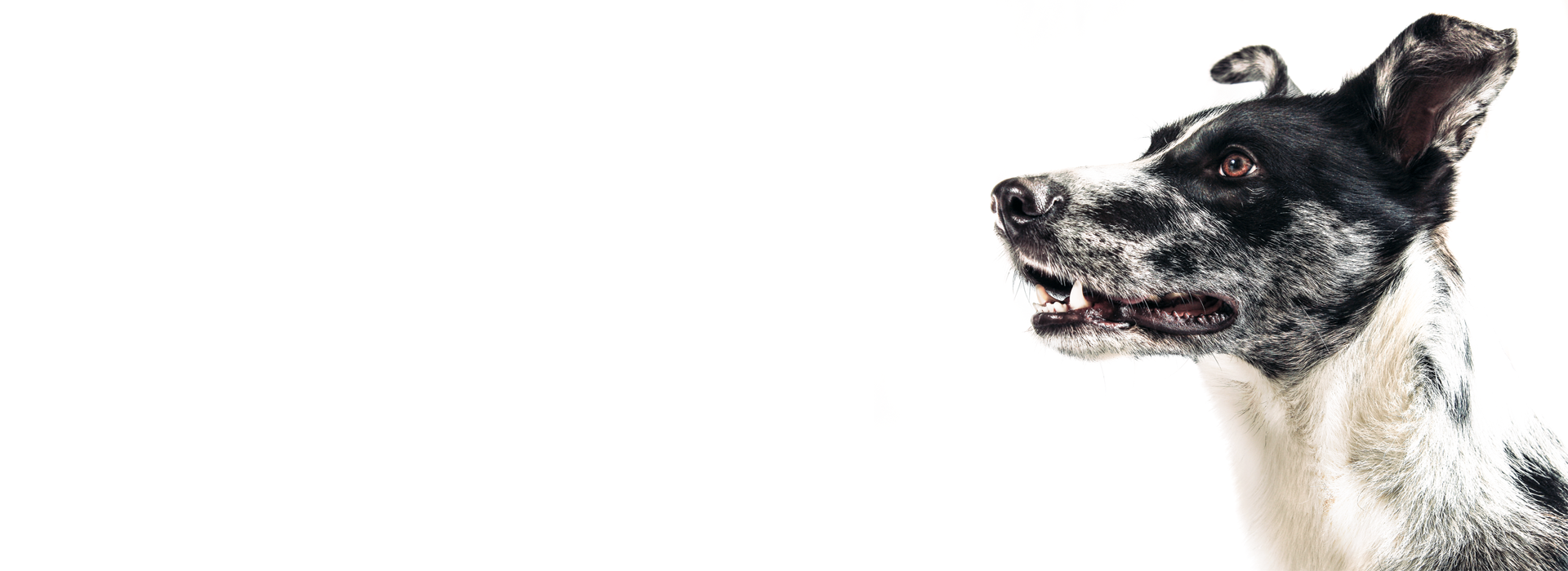 pet photography fotografia animali